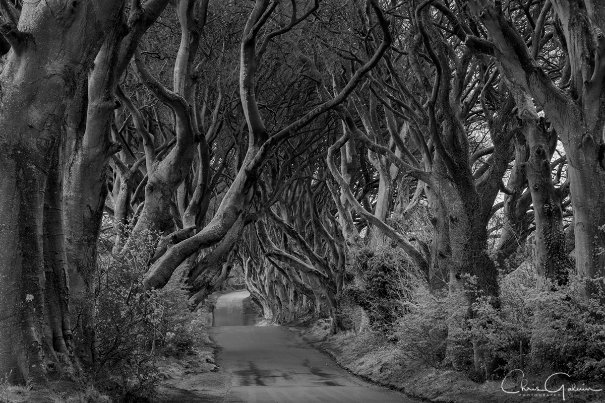 Dark Hedges 2248