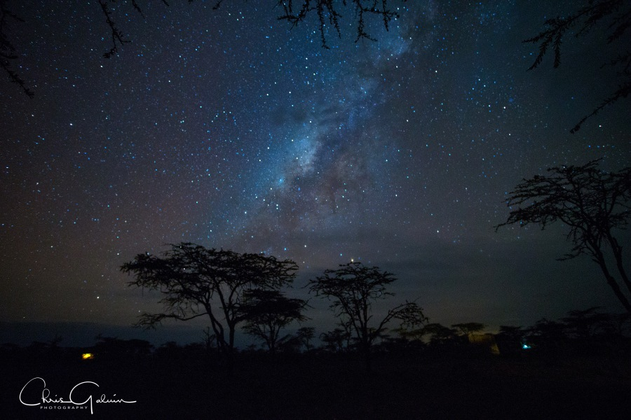 A picture of the Milky Way over the African Savannah